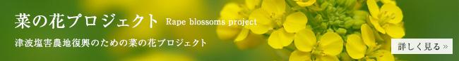 菜の花プロジェクトへ
